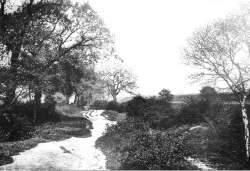 Croxted Road, West Norwood, c. 1875