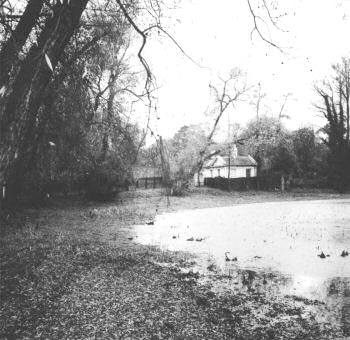 pond-road-01128-1-350