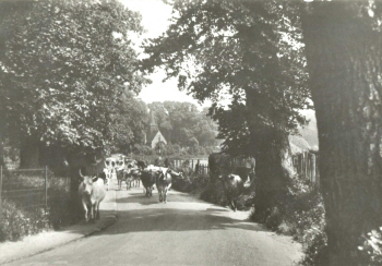 Rectory Lane, Foots Cray, c. 1920
