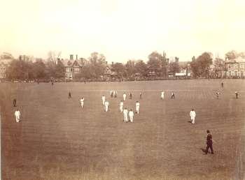 cricket-00836-350