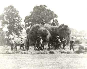 haymaking-00116-350