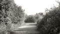Pickford Lane, Bexleyheath, 1932